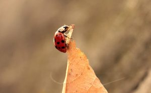 ladybug-1789072_640