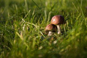 mushrooms-454172_640